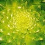 plantmorphology_350x262
